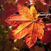 """""""Золотая осень"""" - Белгородпромстройбанк дарит всем хорошее  настроение и подарок каждому клиенту!"""