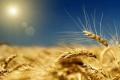 В 2018 году белгородские аграрии получат 7,7 млрд рублей в виде господдержки