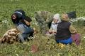 Белгородцев призывают объединяться в сельхозкооперативы