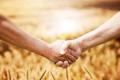 Белгородские аграрии снизили ущерб от АЧС в регионе в три раза